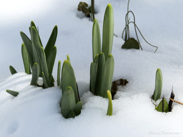 shoots-in-snow