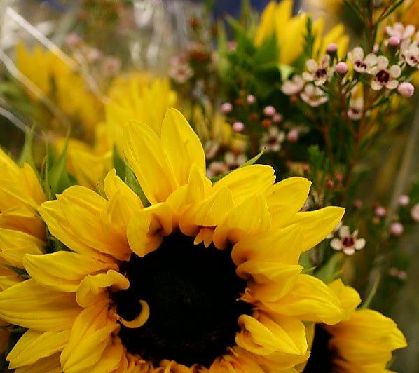 safeway sunflower