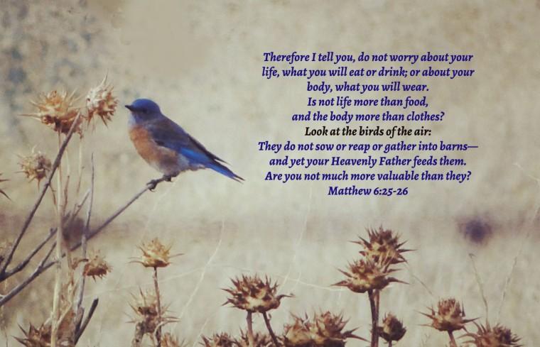 My bluebird another